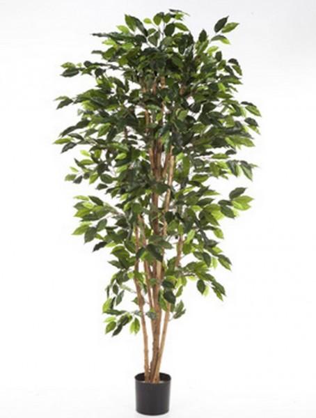 Ficus nitida | Birkenfeige Kunstbaum