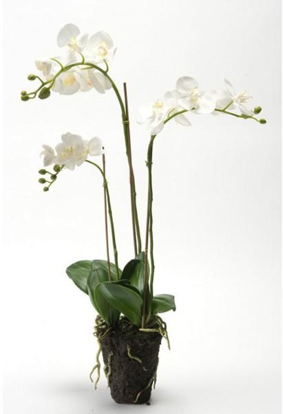 Phalaenopsis x3 75cm white soiled Kunstblumen