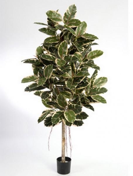 Ficus elastica | Kunstbaum